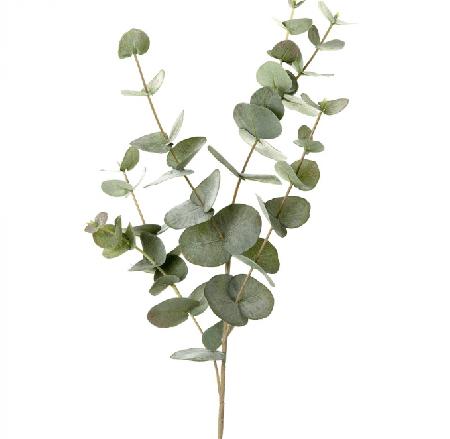 尤加利精油10ml  Eucalyptus radiata